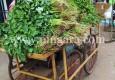ಕರಾವಳಿಯಲ್ಲಿ ಸೊಪ್ಪು, ತರಕಾರಿ ಬಗೆ ಬಗೆ- Article by Perooru Jaru